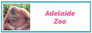 adelaide-zoo