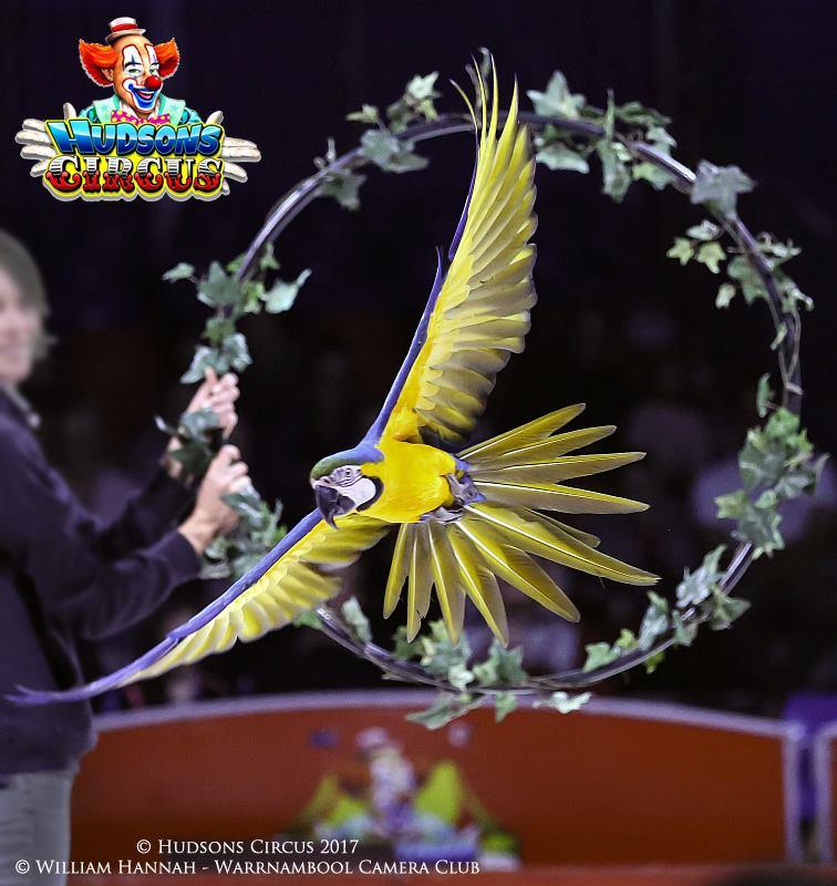 hudsons circus 6