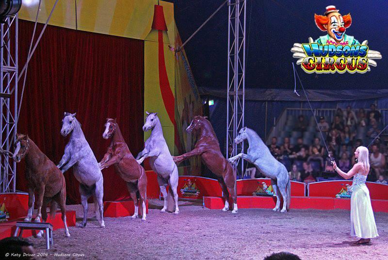 hudsons circus 8